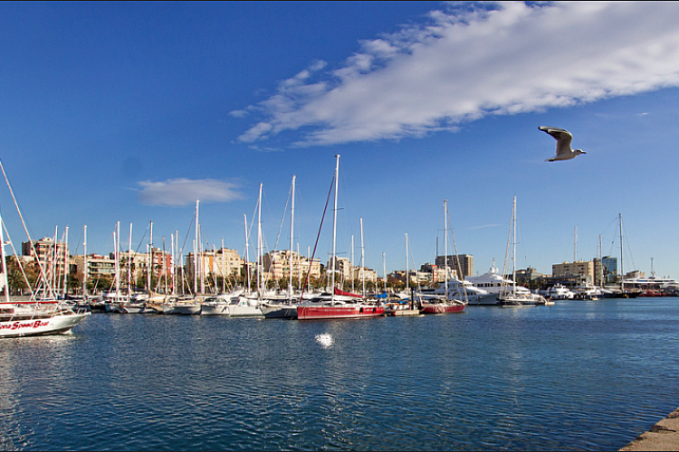The Port is not far from the apartment, you can reach it by walk or using great public transfer service